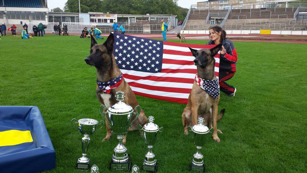 Two Malinois Dogs with American Flag and Awards